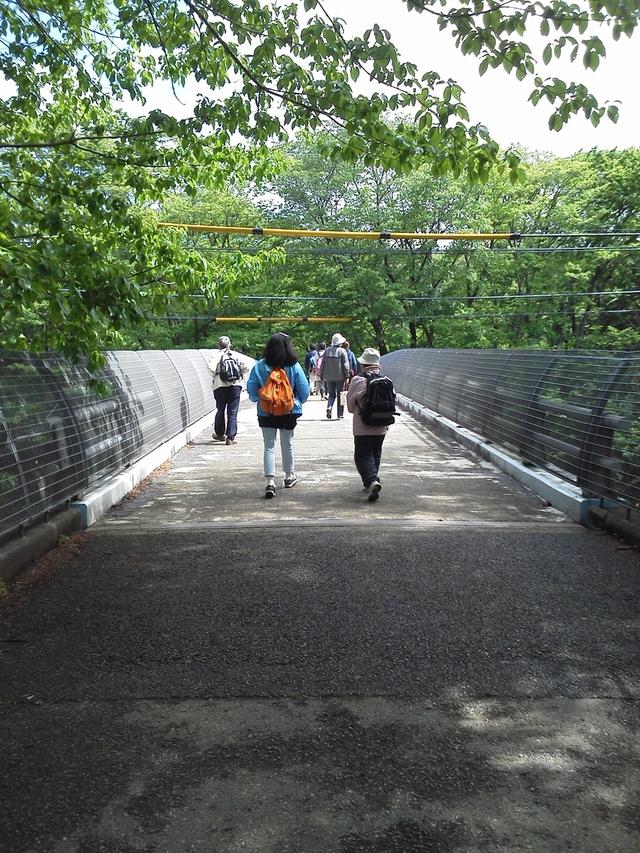 野川公園の橋