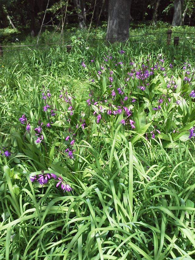 野川公園の花