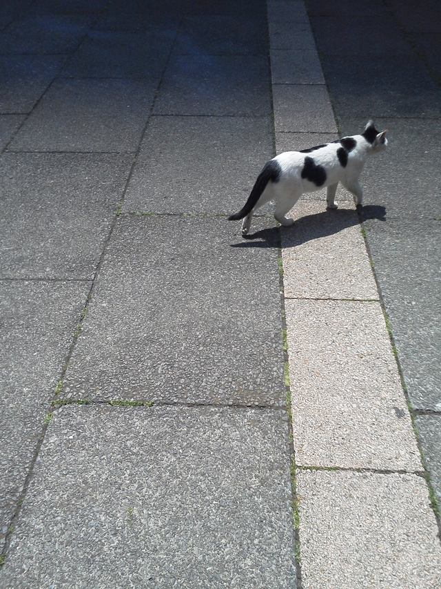 サンシャインの足元にて猫