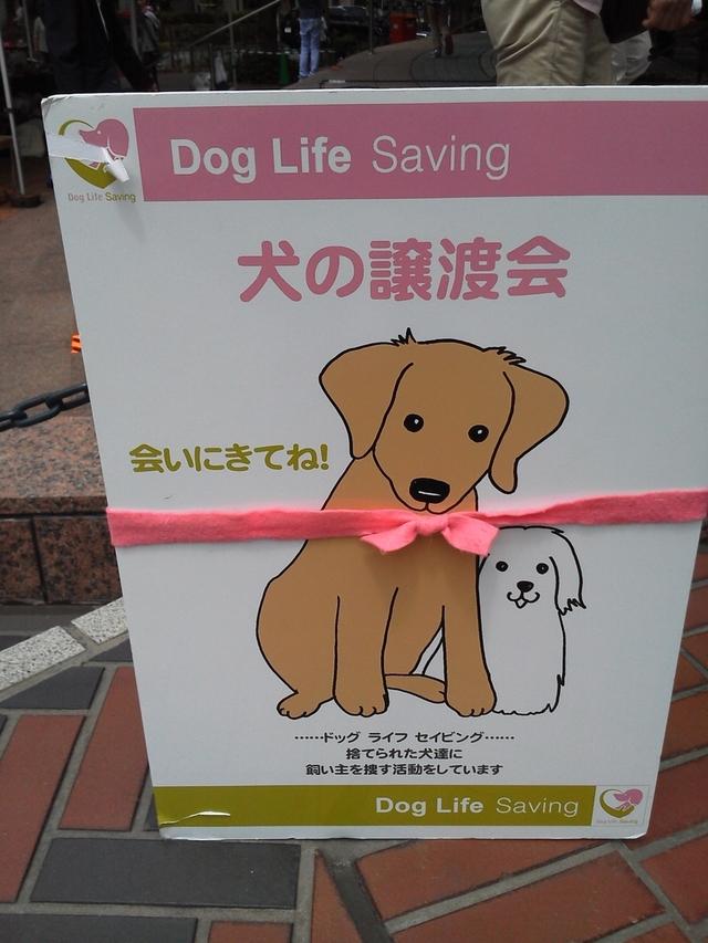 Dog Life Saving