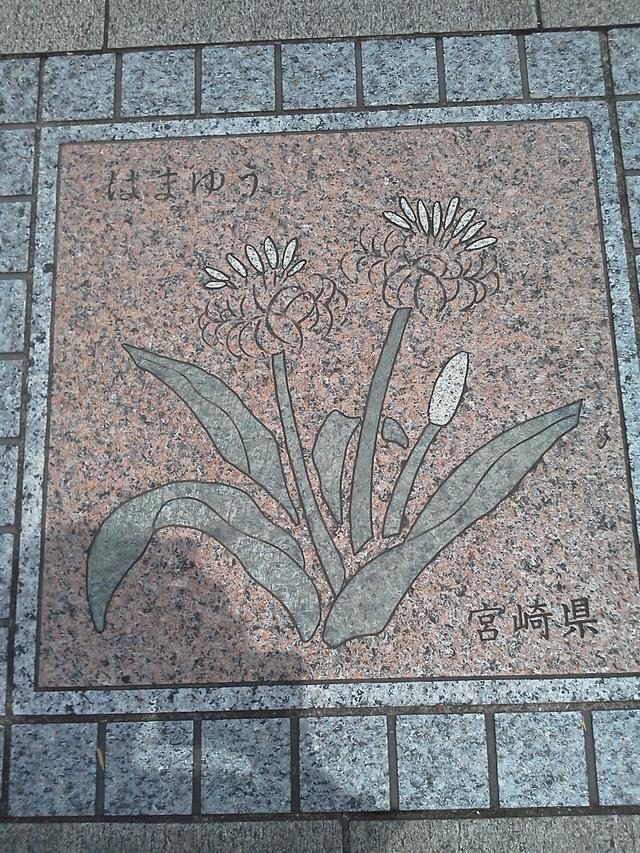 宮崎県の花の環