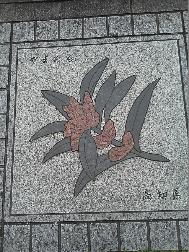 高知県の花の環
