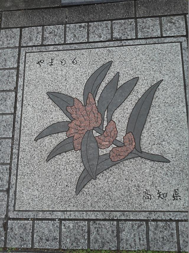 花の環 高知県