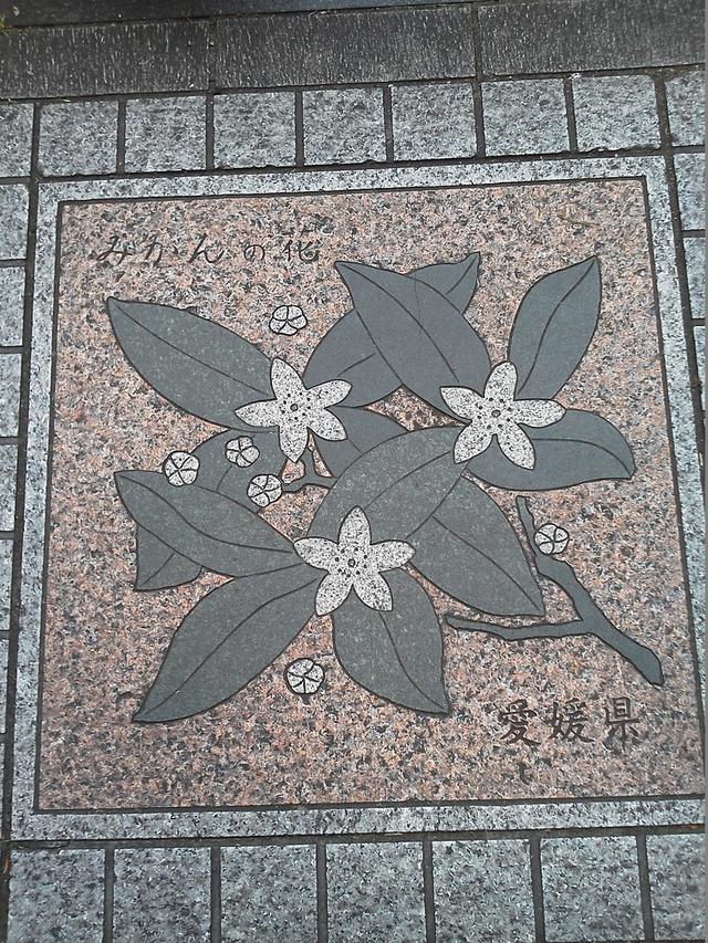 愛媛県の花の環