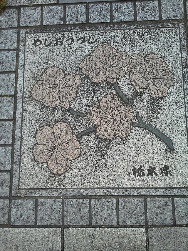 栃木県の花の環