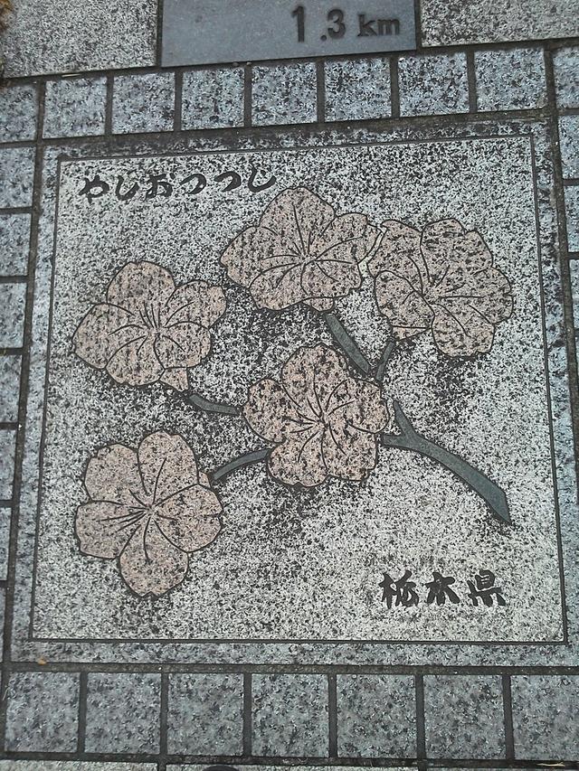 花の環 栃木県