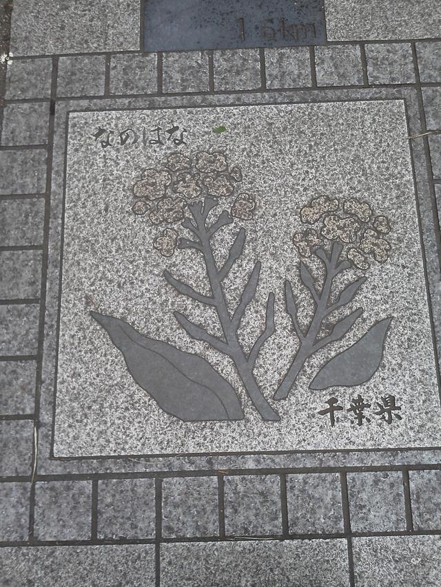 千葉県の花の環