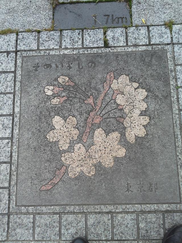 東京都の花の環