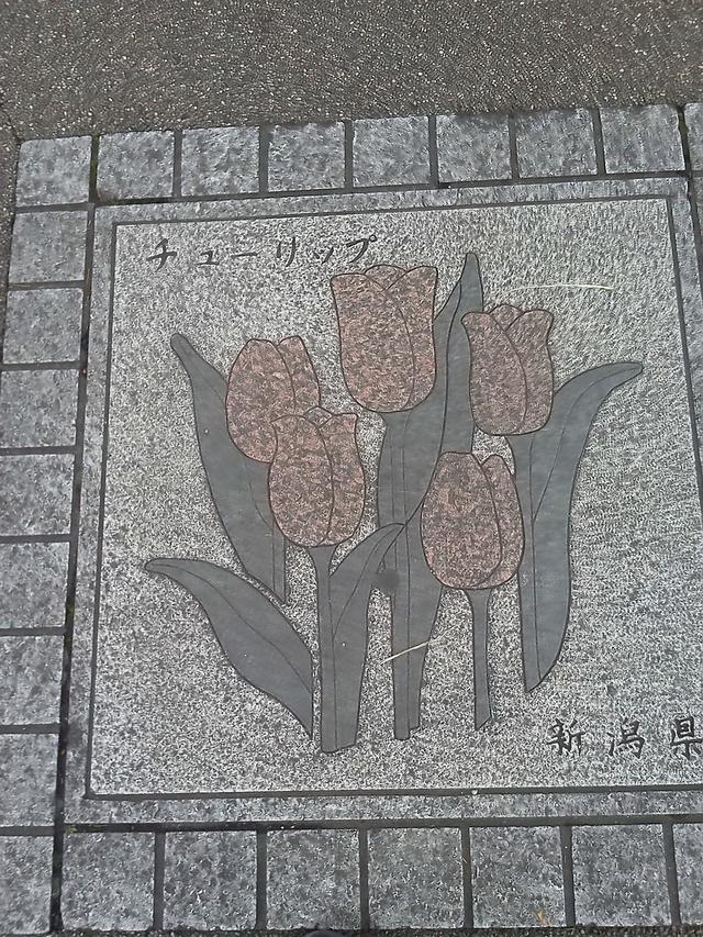 新潟県の花の環