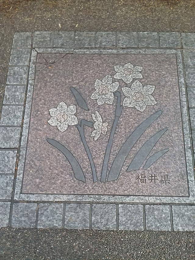 福井県の花の環