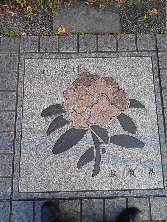 滋賀県の花の環