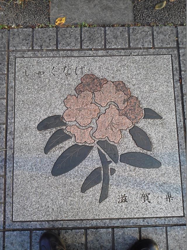 花の環 滋賀県