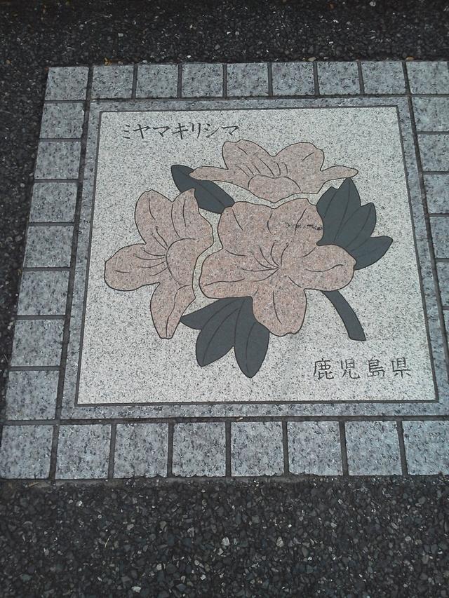 鹿児島県の花の環