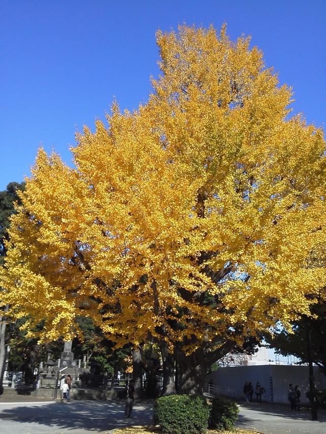 台東区上野の紅葉